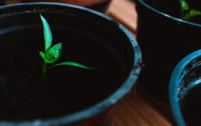 Inhalte platzieren mit Content Seeding